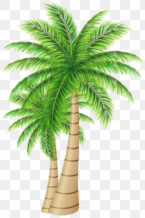 Palm Trees Date Palm Coconut Clip Art PNG