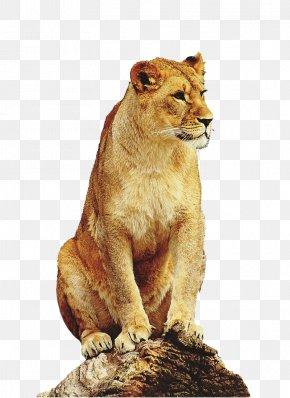 Lion - East African Lion Leopard Tiger Liger Giraffe PNG