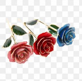 Roses - Garden Roses Beach Rose Flower PNG