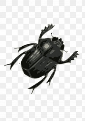 Bug Image - Beetle Clip Art PNG