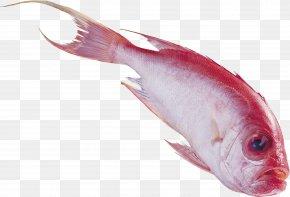 Fish - Fish Nemipterus Virgatus PhotoScape Clip Art PNG