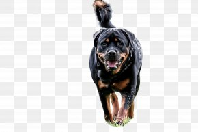 Giant Dog Breed Sporting Group - Dog Rottweiler Working Dog Sporting Group Giant Dog Breed PNG