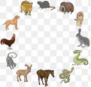 Chinese Zodiac - Chinese Zodiac Chinese New Year Chinese Calendar Monkey Animal-totem PNG