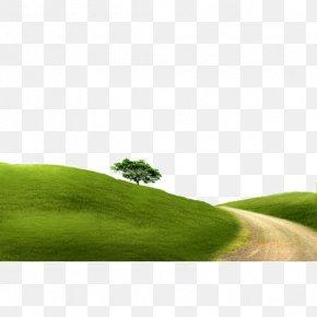 Gravel - Landscape Gravel Tree PNG