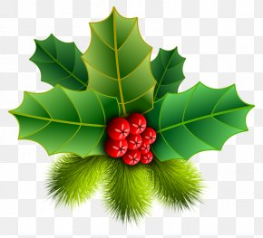 Christmas - Christmas Ornament Common Holly Clip Art PNG