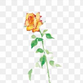 Hand-painted Flowers Plants - Garden Roses Floral Design Cut Flowers PNG