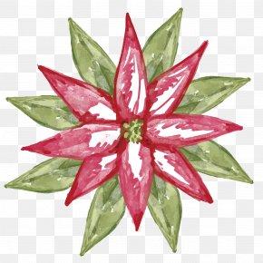 Aloe Watercolor Painted Vector Material - Ilex Cornuta Christmas Plant Poinsettia PNG