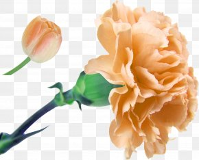 Peony - Carnation Flower Bouquet Floristry Artificial Flower PNG