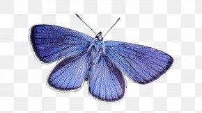 Blue Butterfly - Blue Stock Photography PNG