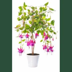 Flower - Houseplant Flowerpot Crock PNG