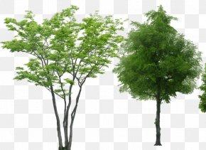 Tree - Tree Rendering PNG