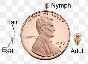 Coin - Lincoln Memorial Penny Lincoln Cent Coin Mint PNG