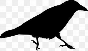 Clip Art American Crow Royalty-free Pigeons And Doves Image PNG