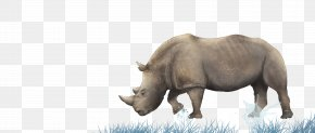 Tashui Rhino - Rhinoceros Wall Horizontal Bar Pull-up Room PNG