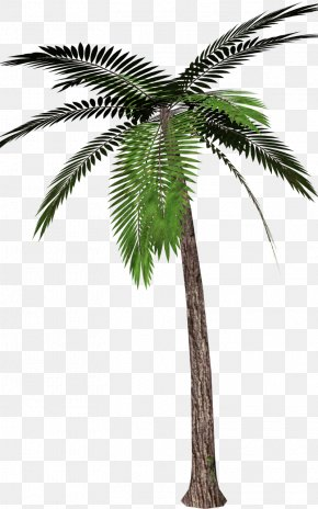 Pohon Salam - Palm Trees Clip Art Image Canary Island Date Palm PNG