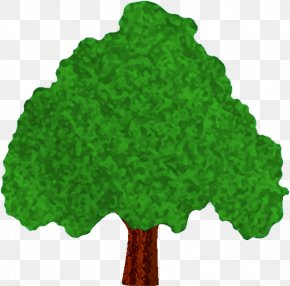 Green Tree - Tree Woody Plant Conifers Rose PNG