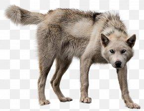 Dd Wolf Cloak - Alaskan Tundra Wolf Greenland Dog Image Wolfdog PNG