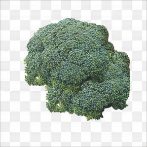 Broccoli - Broccoli Vegetable Food Cauliflower PNG