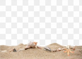 Beach Sand Material - Curriculum Vitae Document File Format Icon PNG