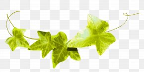 Green Leaves - Leaf Fond Blanc Ivy Clip Art PNG