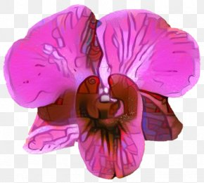 Dendrobium Geranium - Sweet Pea Flower PNG