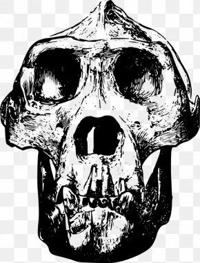Simple Black Gorilla Animal Bones - Gorilla Skull Clip Art PNG