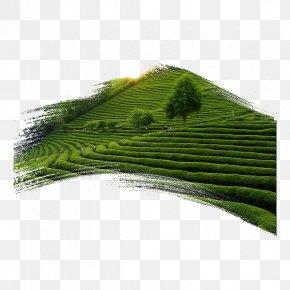 Green Tea Garden - Green Tea Tea Garden PNG