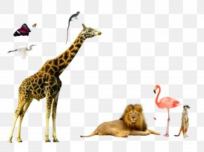 Animal World Giraffe Lion Red Crowned Crane - Northern Giraffe Deer Elk PNG