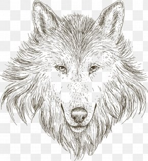 Hand-painted Sketch Wolf Head - Gray Wolf Drawing Sketch PNG