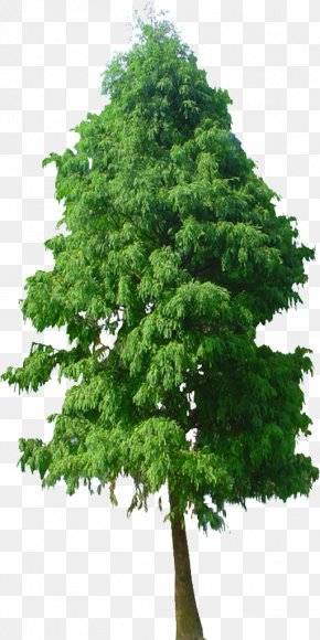 Green Trees Background Image - Tree Plant Flower PNG