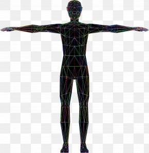 Human - Vitruvian Man Human Body Homo Sapiens Drawing Clip Art PNG