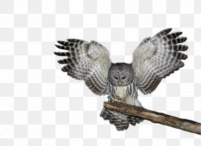 Owl Images - Owl PNG
