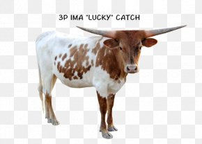 Texas Longhorn - Texas Longhorn Zebu Calf English Longhorn Dairy Cattle PNG