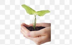 Holding Plant - Plant Soil PNG