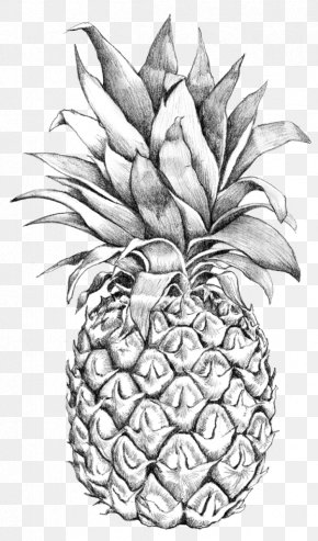Pineapple Drawing Line Art - Drawing Sketch Art Pineapple Image PNG