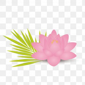 Vector Pink Lotus - Nelumbo Nucifera Lotus Effect Flower Leaf Euclidean Vector PNG