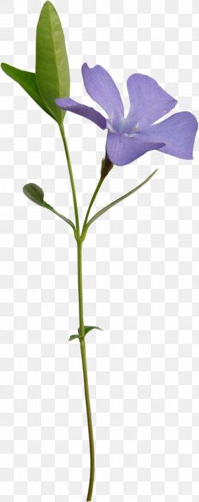 Saffron Green Leaves - 3D Computer Graphics Flower Clip Art PNG