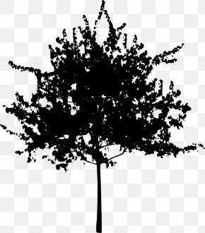 Vector Maple Leaves - Tree Branch Trunk Clip Art PNG