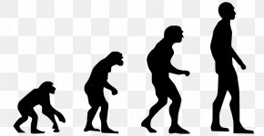 Homo Sapiens - Homo Sapiens Ape Human Evolution Evolution 2.0: Breaking The Deadlock Between Darwin And Design PNG