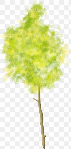 Trees - Tree Woody Plant Clip Art PNG