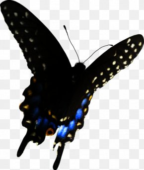 Animal Figure Brushfooted Butterfly - Butterfly Black And White PNG