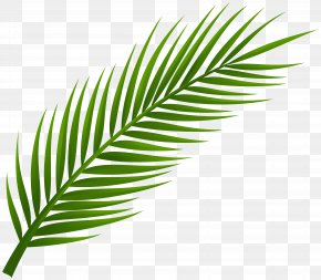Palm Branch Cliparts - Arecaceae Leaf Palm Branch Clip Art PNG