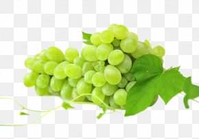 A String Of Grapes - Red Wine White Wine Sultana Muscat Sauvignon Blanc PNG
