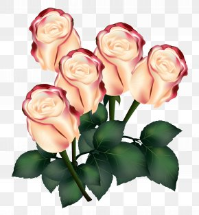 Roses Clipart Image - Garden Roses Centifolia Roses Flower PNG