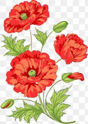 Watermelon Red Chamomile - Poppy Flowers Common Poppy Opium Poppy PNG