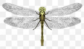 Dragon Fly - Pterygota Dragonfly Invertebrate Pest Arthropod PNG