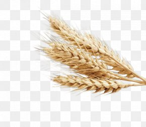 Wheat - Emmer Cereal Germ Whole Grain PNG