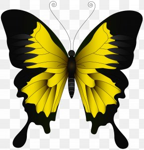 Yellow Butterfly Clip Art Image - Monarch Butterfly Green Yellow PNG