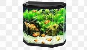 Aquariums Aquarium Filters Ciano Aqua Pet PNG