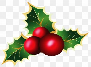Transparent Christmas Mistletoe Picture - Mistletoe Christmas Viscum Album Clip Art PNG